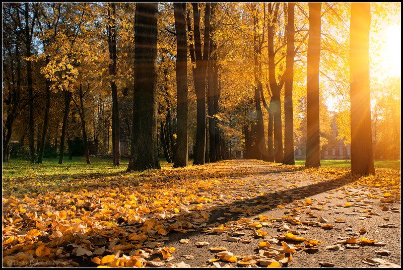 Осенние тени