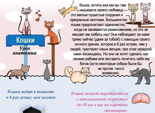 геи интим форум пес и кот