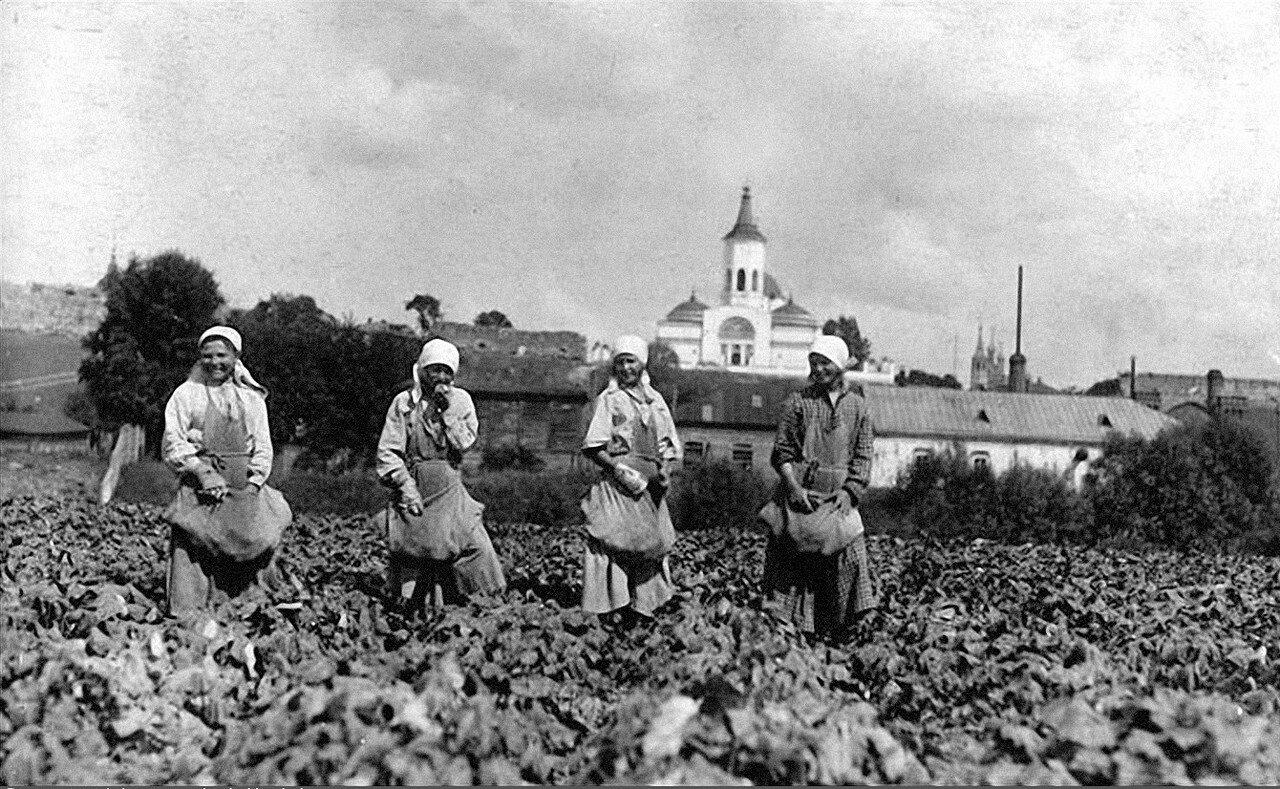 1925. Уборка огурцов. Серпухов