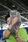 1364992161_all4cat_astra_111_1305.jpg