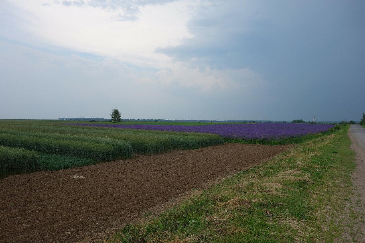 туча над красивым полем у села Воротынск