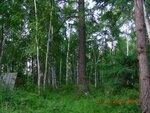 Смешанный лес центра Камчатки..JPG