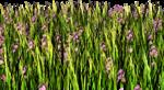 Lug_Grass_Flower (9).png