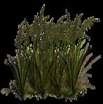Lug_Grass_Flower (74).png