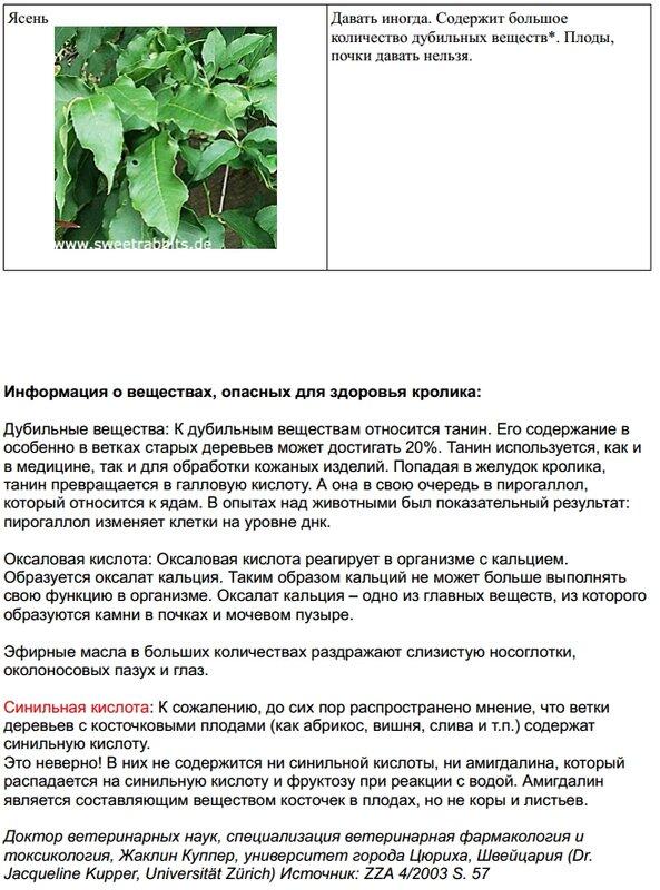 Веточный корм. 0_9c957_903a39a8_XL