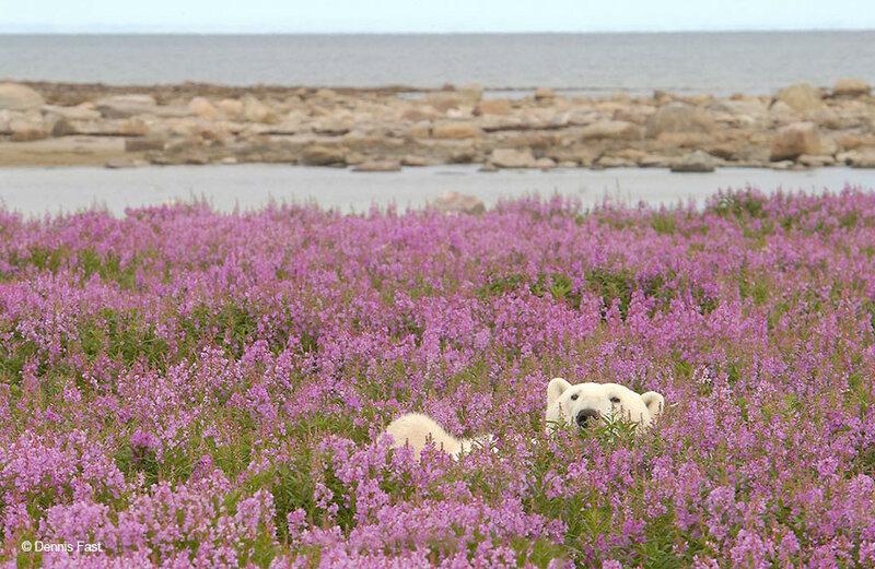 медведи в цветах Dennis Fast