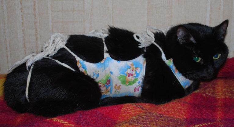 Кошка в попоне (вид сбоку)