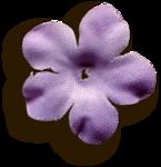 kimla_LS_flower1_sh.png