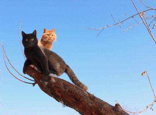 вот и коты прилетели......
