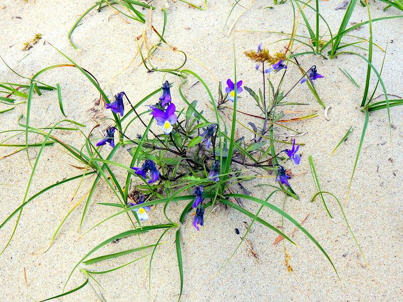 Песчаные цветы