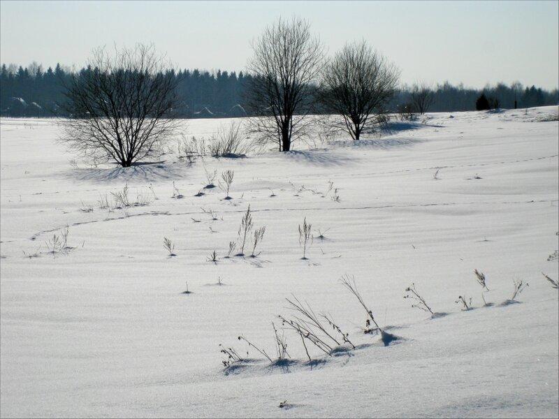 Три дерева в Муракинском поле
