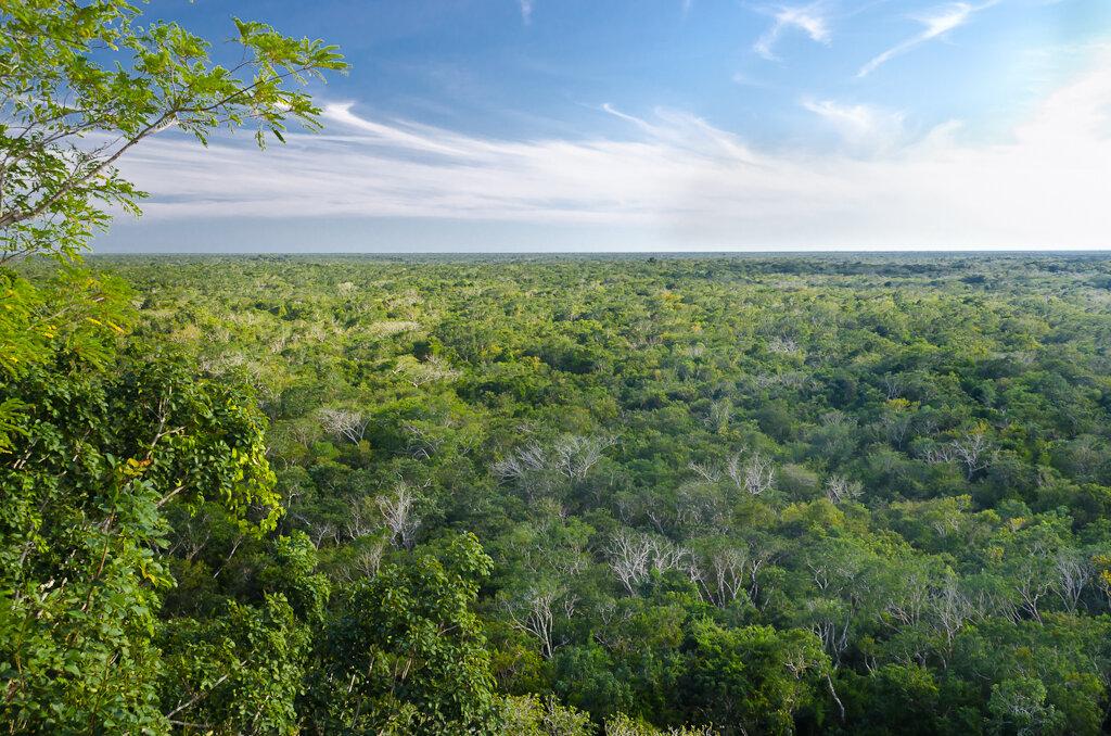 Мексиканская сельва с вершины пирамиды индейцев Майя в г. Коба в Мексике Снято на Nikon D5100 KIT 18-55 + китайский полярик за 500 рублей. Поляризационный фильтр подчеркивает синеву небе и зелень деревьев.