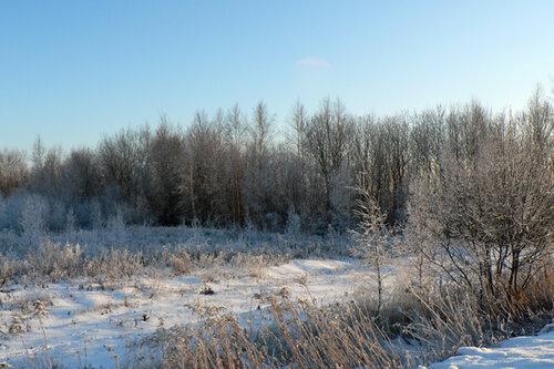 зимняя прогулка у леска