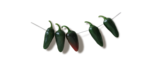 Lily_leaf_el (58)sh.png