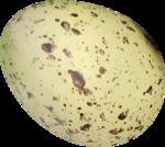 NLD Egg (4).png