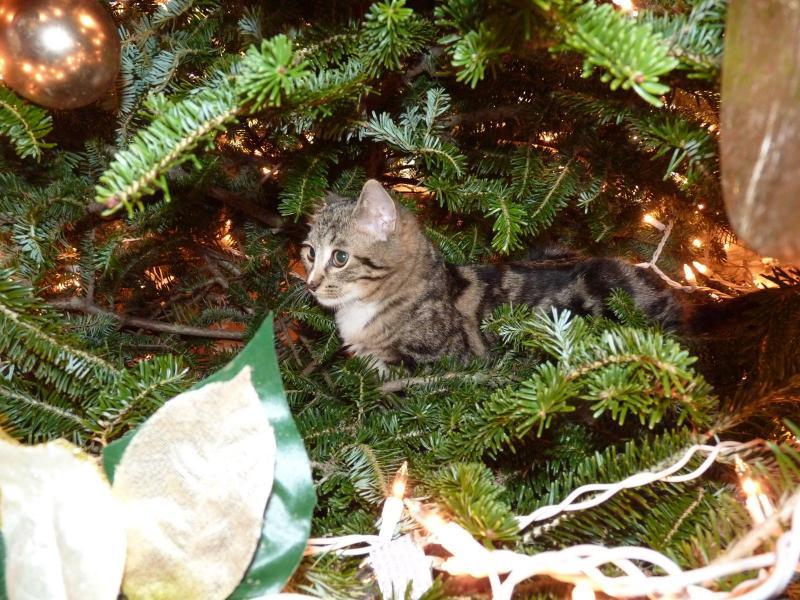 Коты на ёлке - фото 21
