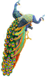 61788785_OrientalPeacocks_01_mm.png