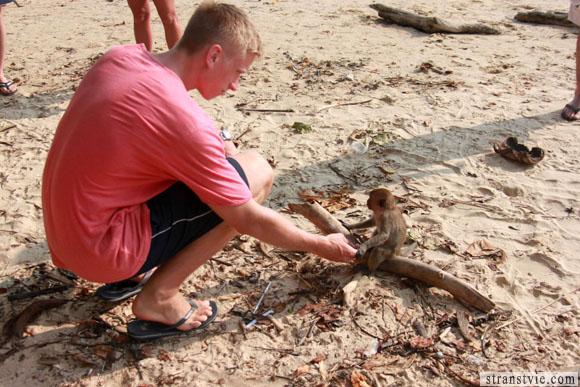обезьяны на пляже ао нанг в краби