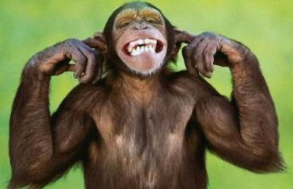 скачать игру веселая обезьянка бесплатно - фото 7