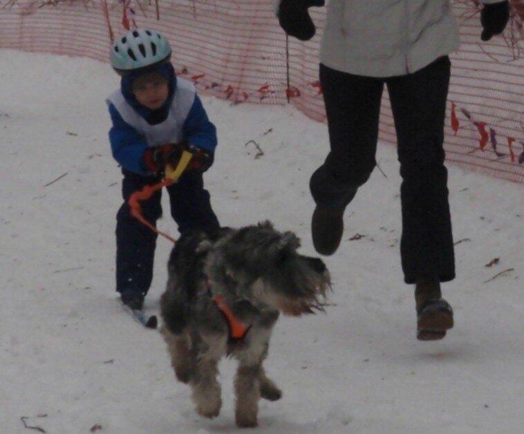 Соревнования в гонках на собачьих упряжках - фото 1