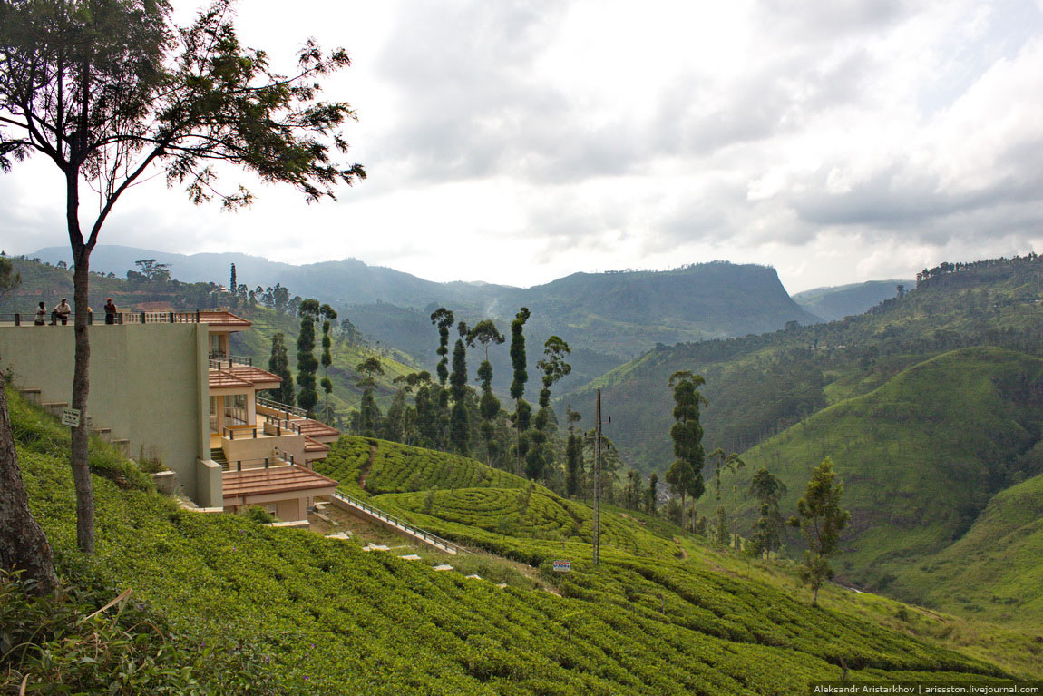 Шри-Ланка_Чайный замок_34