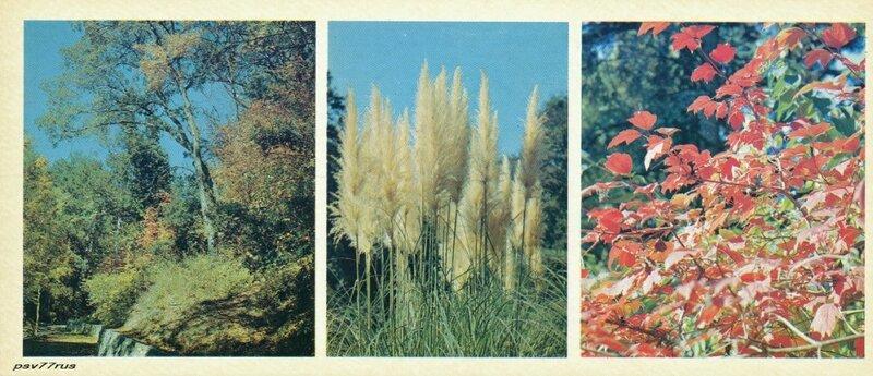 Осень в дендрарии.  Пампасская  трава (в центре).