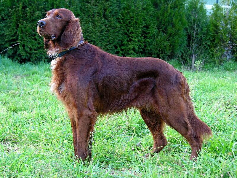 Новинка: Собачий жир натуральный!