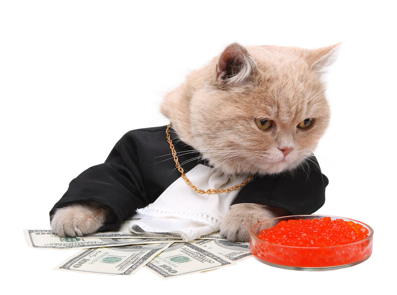 Red cat sitting on the dollar, Christmas, New Year