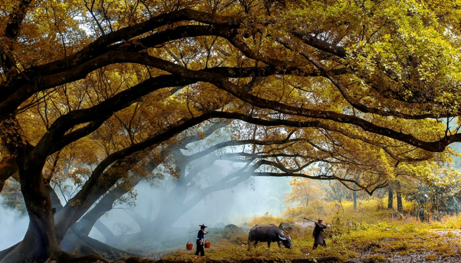 ©Jonathan Туман нарассвете