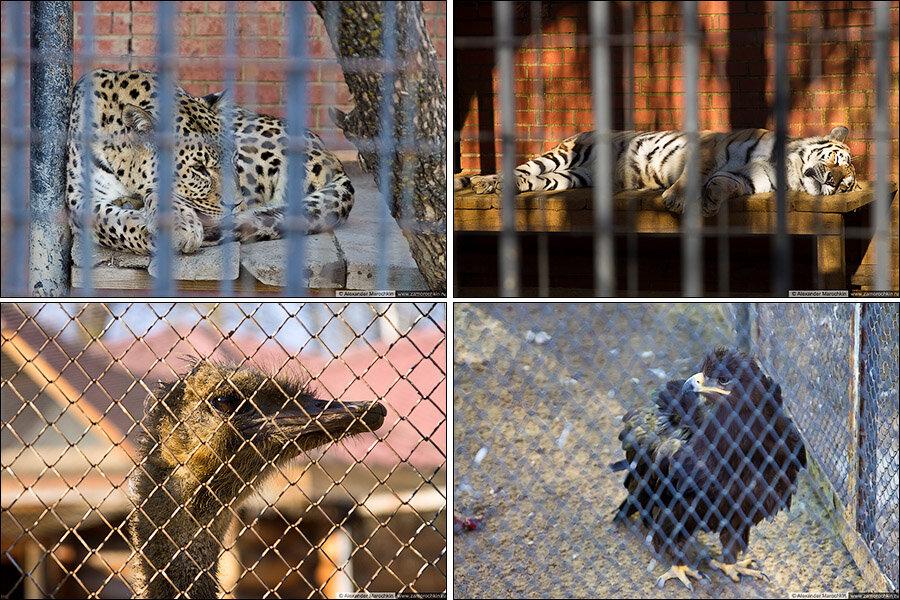 В саранском зоопарке