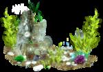 Водоросли и кораллы