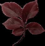 Lilas_btd_foliage10.PNG
