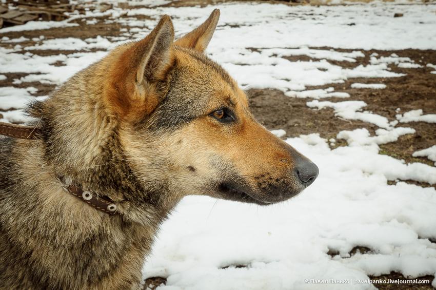 дино собака pavelpanko