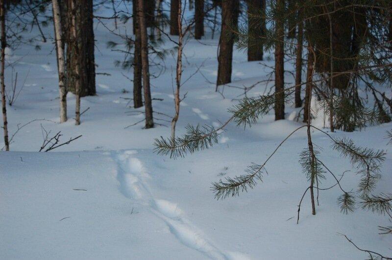 югра фото зима блогеры