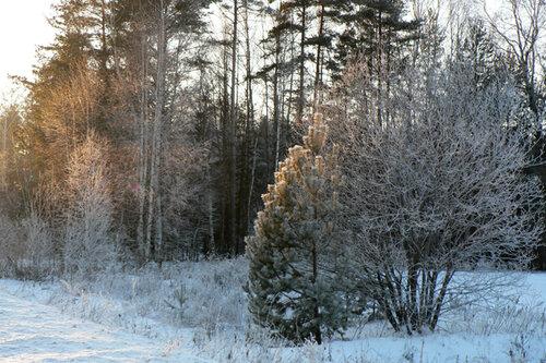 зимняя прогулка опушка