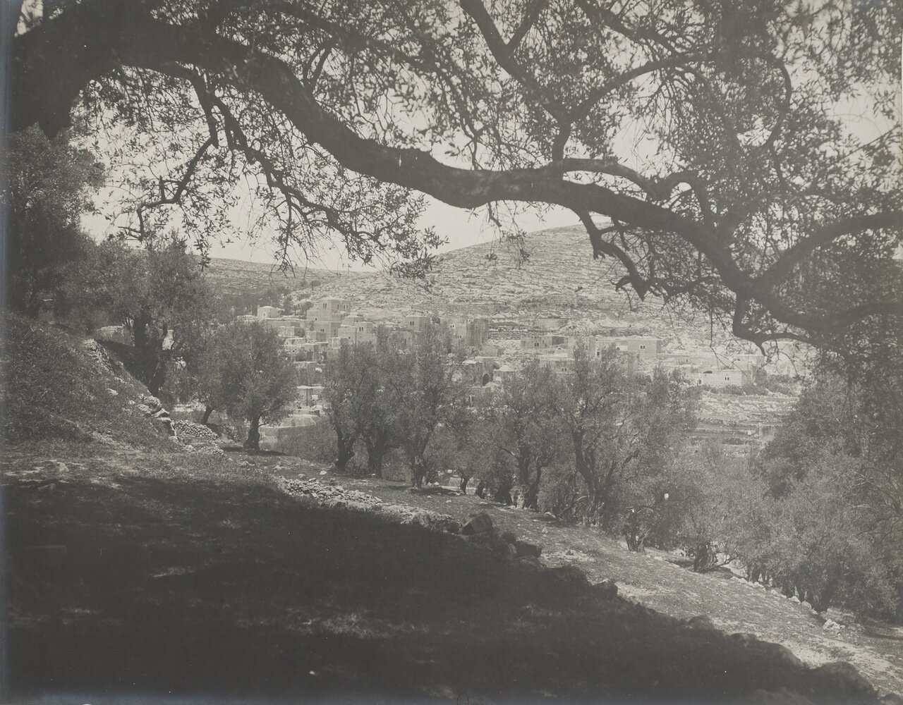 Палестина. Хеврон.