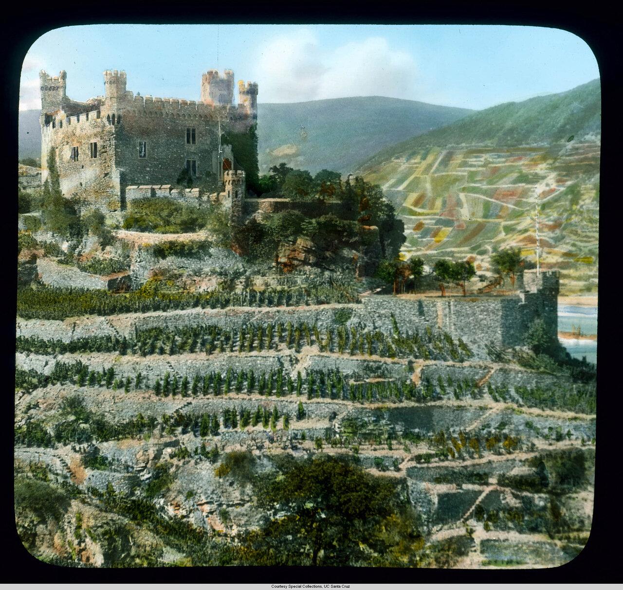 Рейнская долина. Крепость Райхенштайн (Трехтингсхаузен) среди террас с виноградниками.