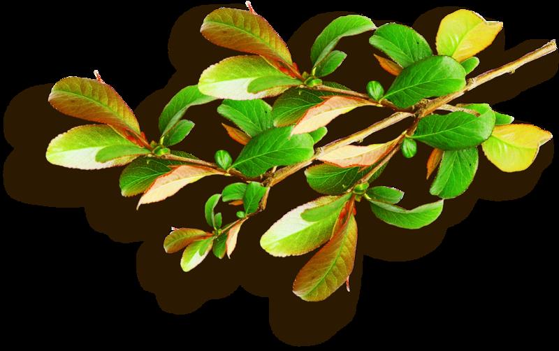 Листва, ветки дерева, деревья и кустарники