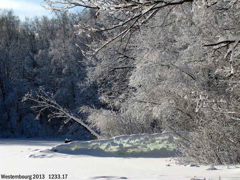 1233.17 Собачий пруд