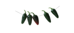 Lily_leaf_el (58).png