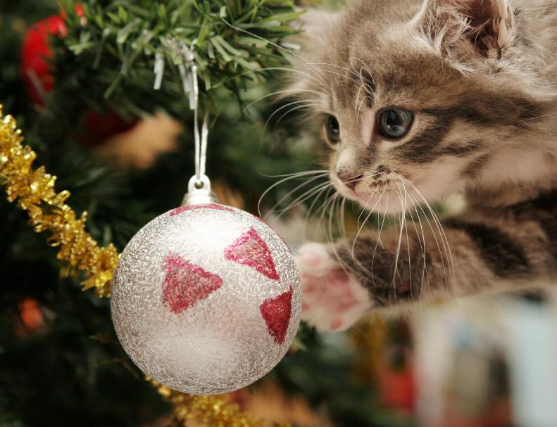 Коты на ёлке - фото 22