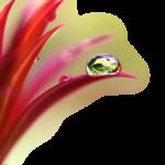 Клипарт-разные цветы
