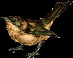 nb_vp_bird3.png