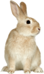 EasterOnTheFarm_Element01 (18).png