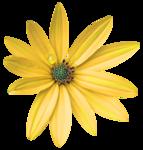 feli_gs_flower2.png