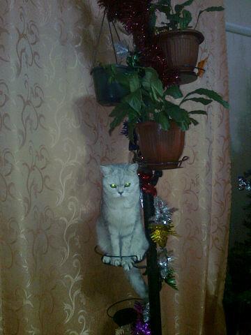 http://img-fotki.yandex.ru/get/6426/176414878.3/0_ac6c6_567dda75_L.jpg