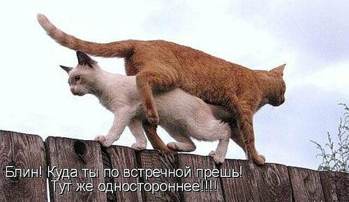 http://img-fotki.yandex.ru/get/6426/194408087.1/0_8fc13_e58a7ad3_L.jpg