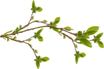 KMILL_branch-real.png