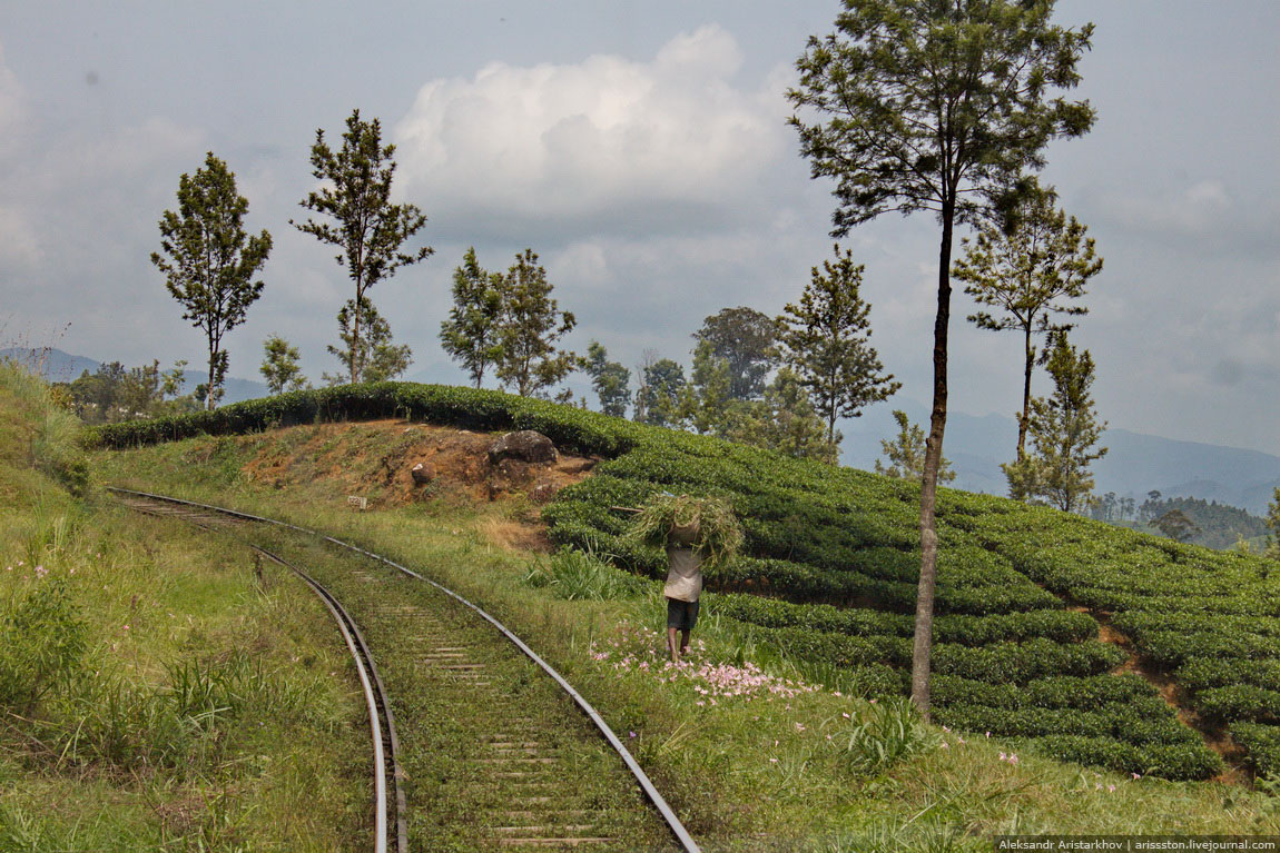 Шри-Ланка_Железная дорога_20