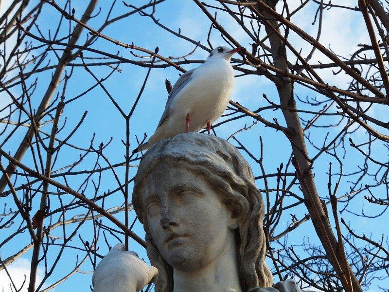 птицы Лувра